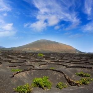 Lanzarote La Geria vineyard on black volcanic soil