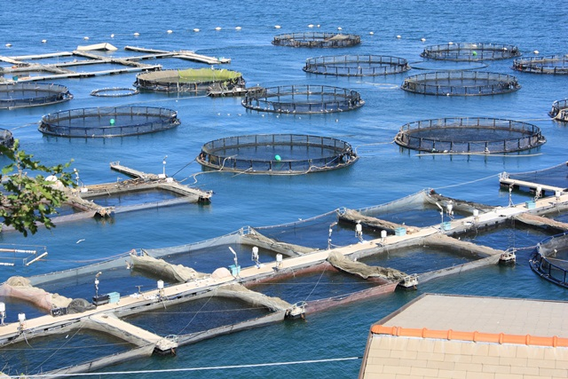 Aquaculture in the eu european parliamentary research for Illinois fish farms