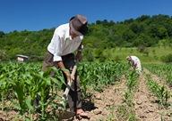 2014 International Year of Family Farming