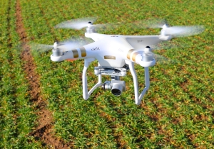 Drone above the agricultural field