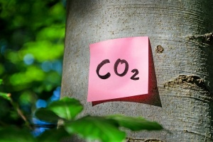 CO2 post-it on a tree