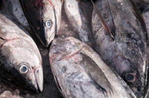 Transposing international measures for Atlantic tuna fisheries into EU law