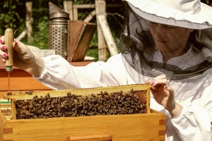 Apiary - woman beekeeper with bees