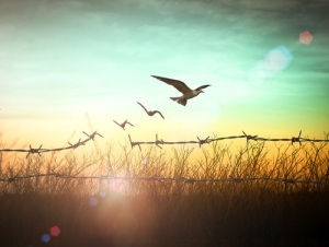 Freedom concept: Silhouette of bird flying and barbed wire at su