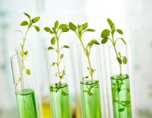 Laboratory analysis of plant