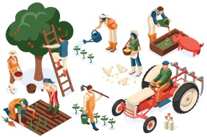 Flat tractor set. Farmer, agricultural worker with plant, chicken, sheep, rabbit, cow, milk, fruit or feeding farm animal. Harvest man with apple. Girl isometric images isolated on white background.